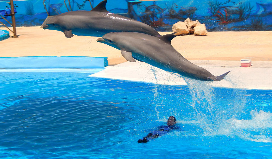 Bahar ic-Caghaq Swim with the Dolphins