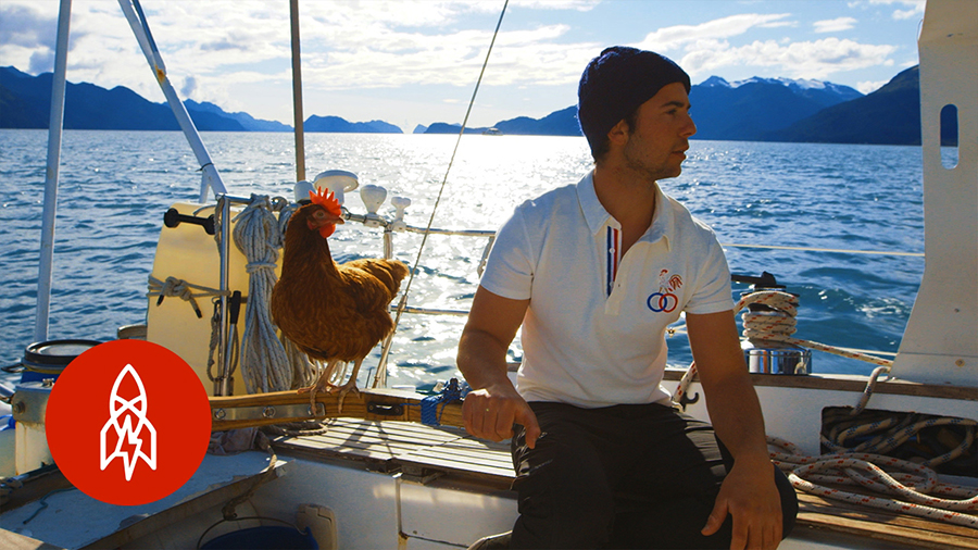 sailing solo around the world with a pet chicken book2sail